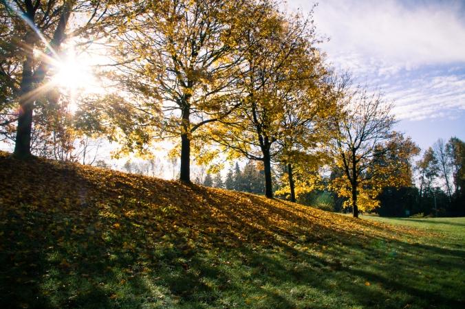 sun-flares-in-fall-2